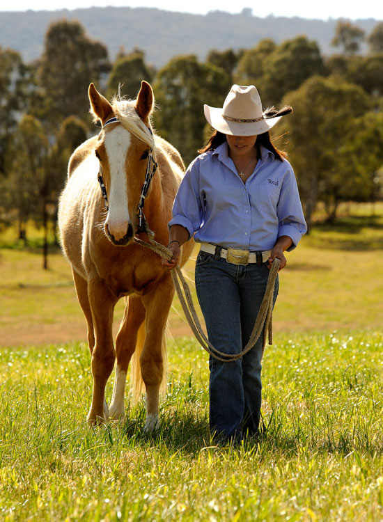 Tocal-stock-horse-sale